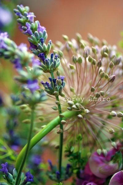 Wild flowers provence