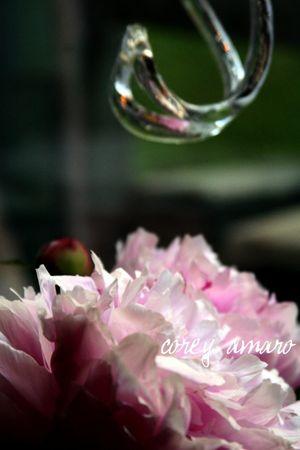 Crystal and pink wonder