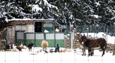 Twelve farm animals and a friend