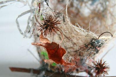 Bird nest details