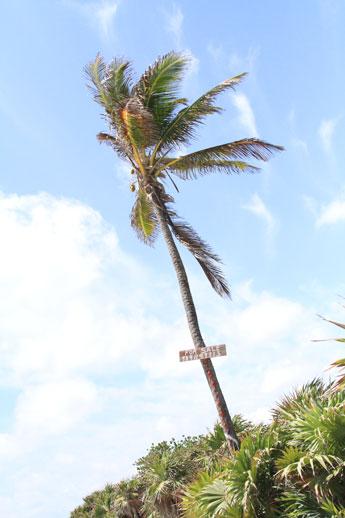 Tulum-beach-for-sale