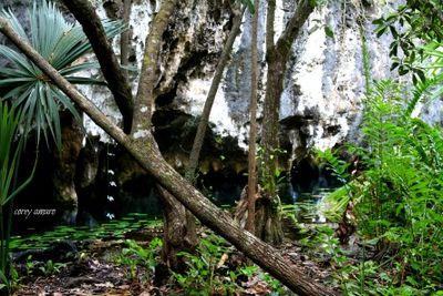 Cenote jungle mexico