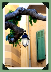 Plane tree in provence
