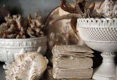 Collections Seashells