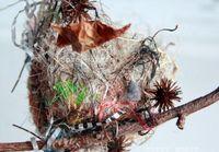 Nest details martha stewart style