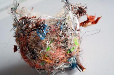 Bird's nest found