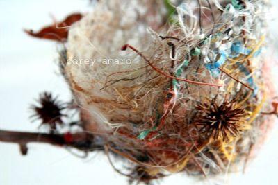 The bird nest