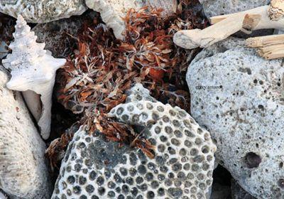 Coral-in-tulum