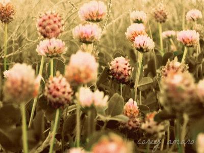 Little flowers underfoot