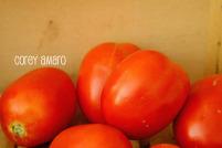 Roma tomates