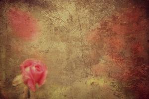 Rose against a stone facade Corey Amaro