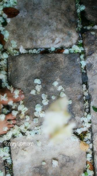 Flower petals falling