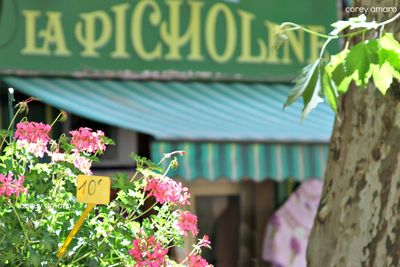 Aix en provence flower market