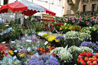 Flower market aix en provence