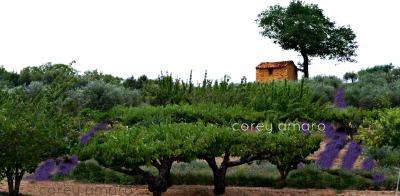 Peek into Provence