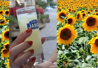 Provence  and pastis