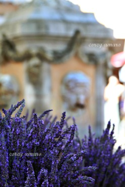 French, Provence, Lavender, Market