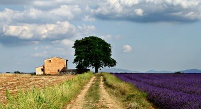 French Country,  Lavender