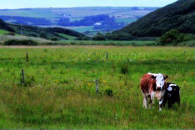 Boreens,back roads,ireland,Ireland countryside