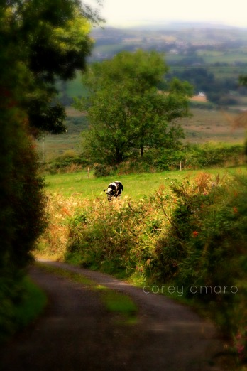 Boreens,back roads,ireland