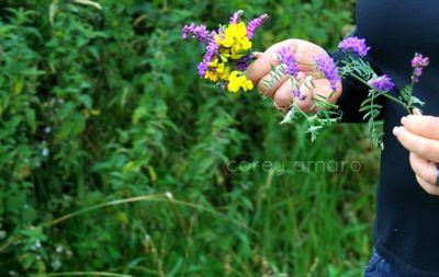 Wildflowers,Boreens,back roads,ireland