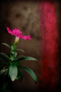Night flower Corey Amaro