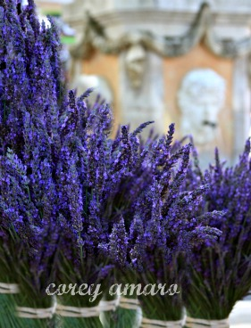 Provence, lavender, travel