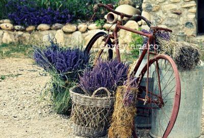 Bicycle, lavender, France