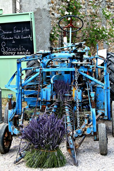 Lavender cutting tractor