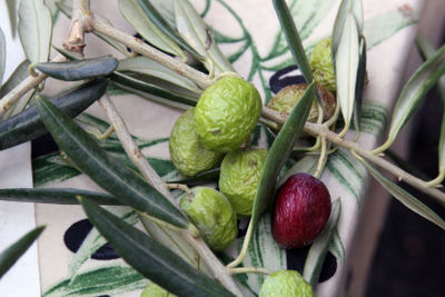 Color-of-provence-olive