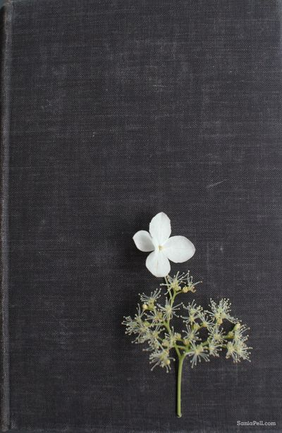 Sania-pell-flower-book-8