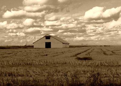 White barn in a field