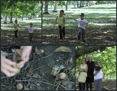 Walnut orchard Collage
