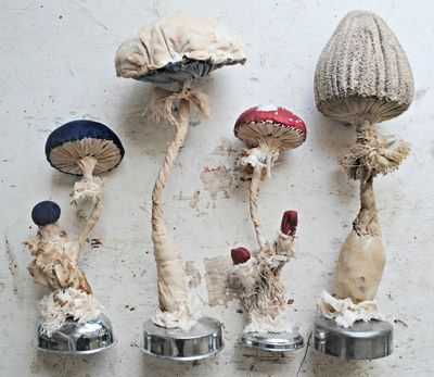Toadstools mr finch