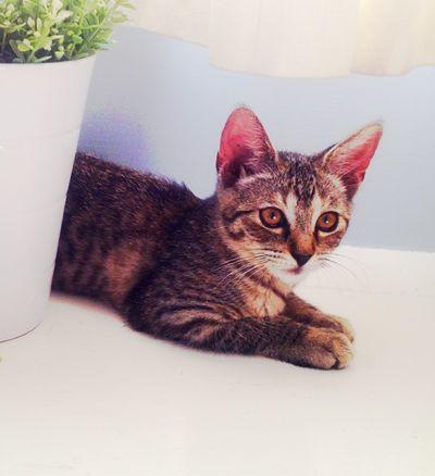 Kitten by Marie