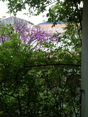 Outside my Bedroom Window