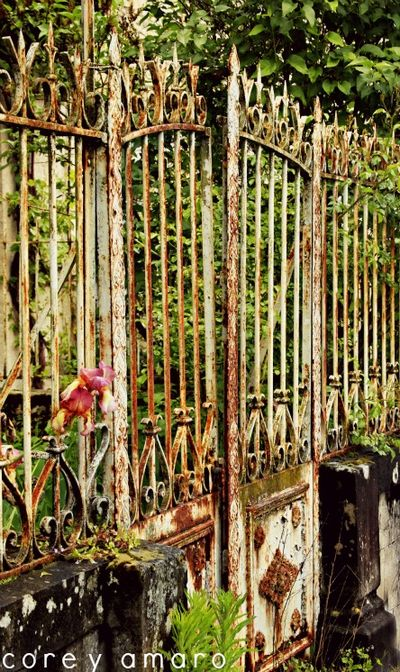 Secret garden iron fence