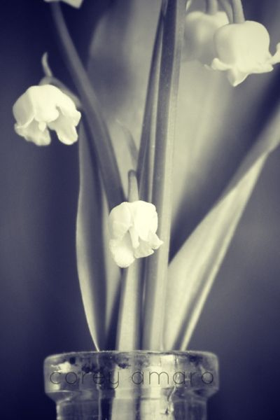 Black and white lily of the valley