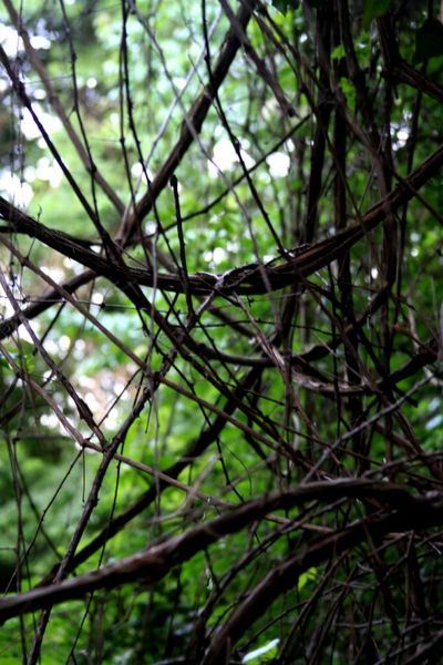 Branches woven