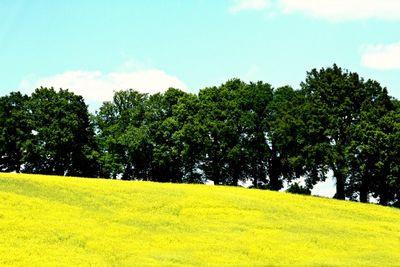 Mustard field in France