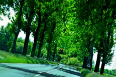 Tree lined road France