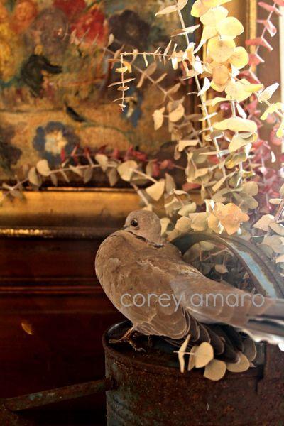 Taxidermy pigeon Stéphanie Mayeux Mortagne Au Perche