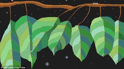 Hal lasko leaves