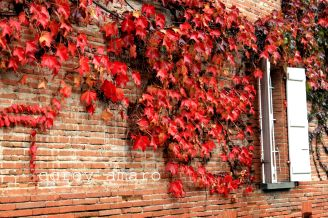 Thanksgiving Leaves on a brick wall