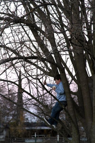 Popcorn ball in a tree
