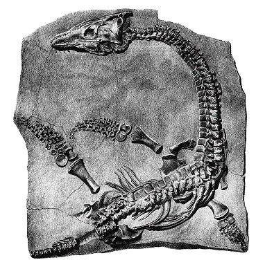 Plesiosaur mary anning