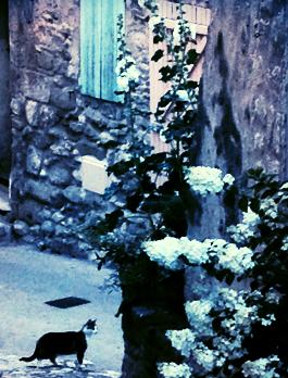 Provencal Postcards Lacoste