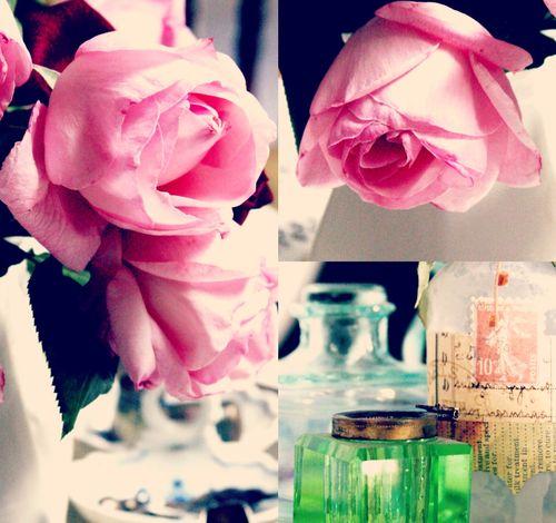 Flowers judy