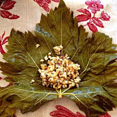 Feuilles de vignes, grape leaf