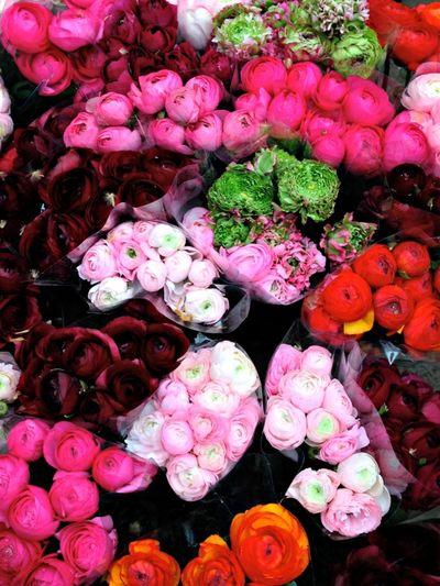 Flowers in aix